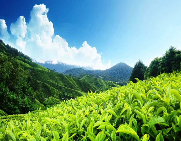 Darjeeling Packages